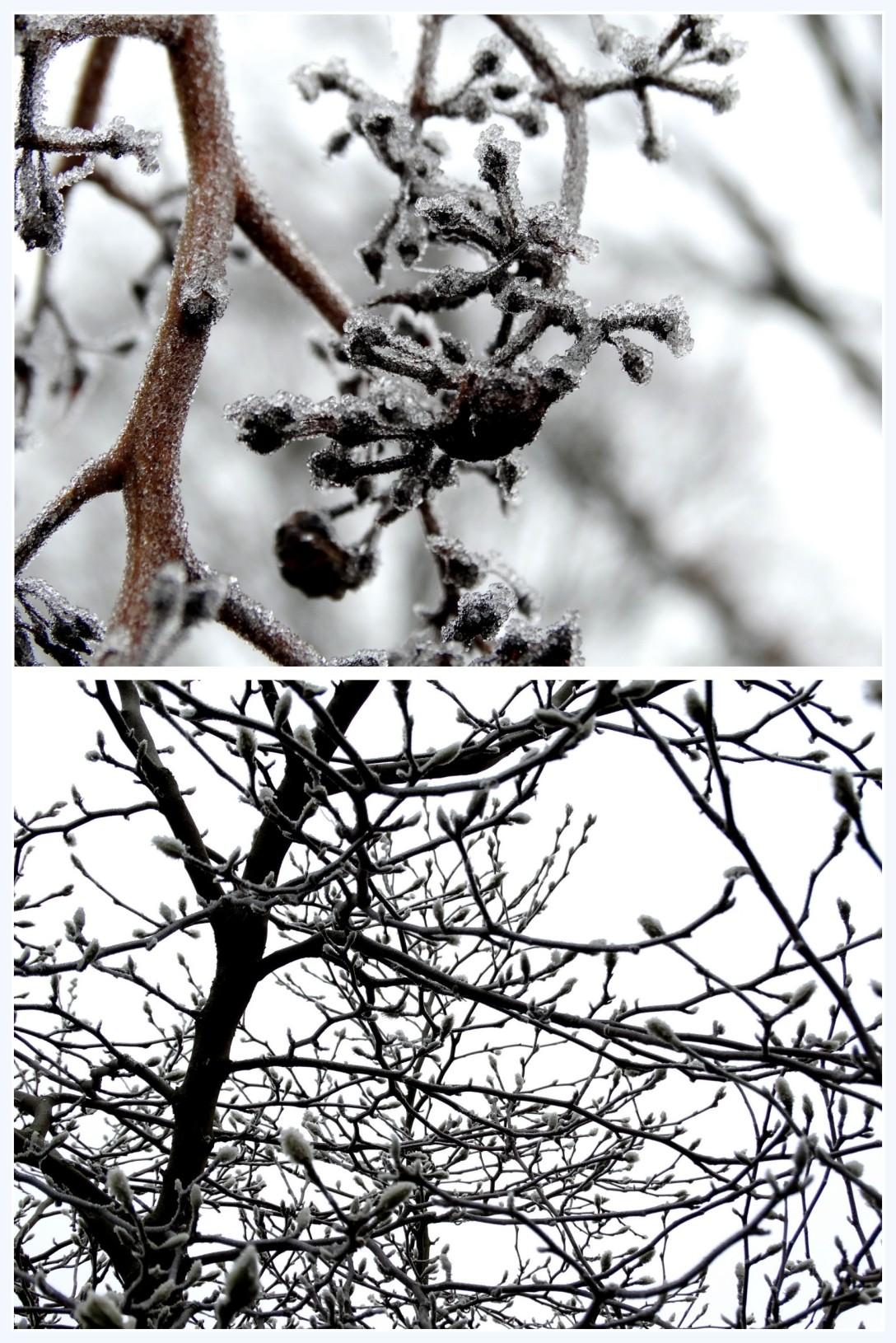 winter 2016 2