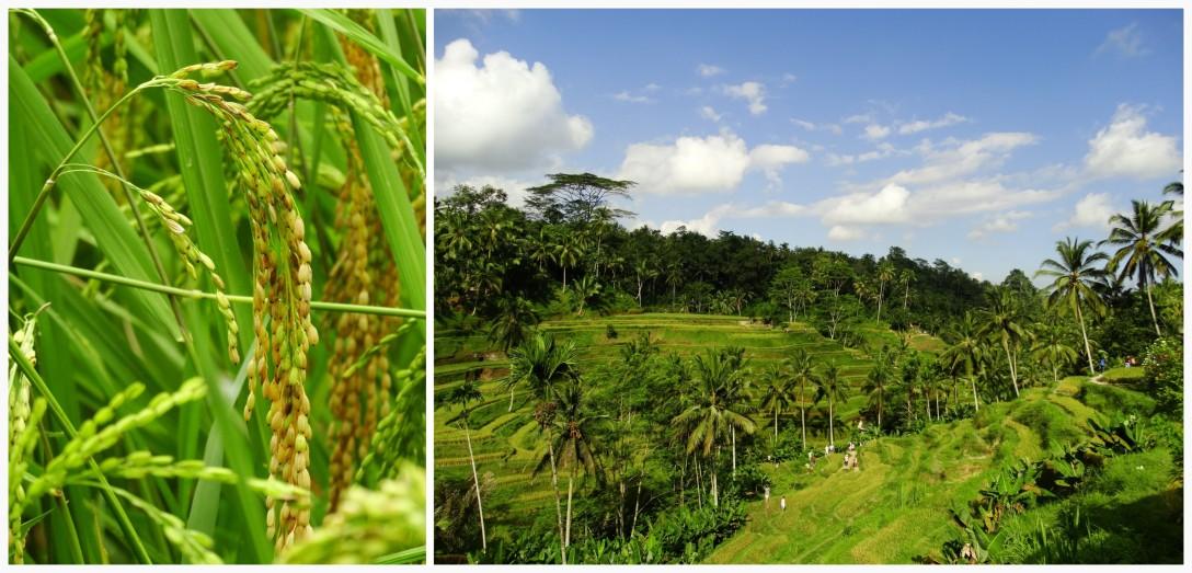 week 9 Bali 4