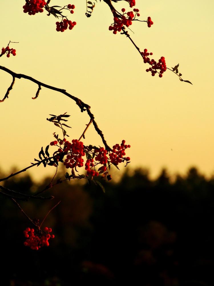 golden hour 15