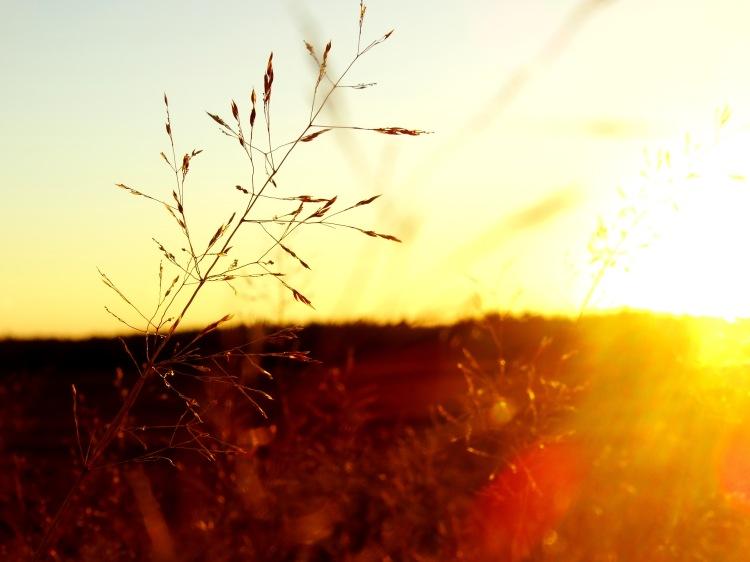 golden hour 16