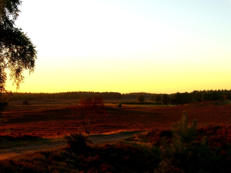 golden hour 17