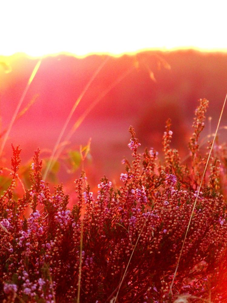 golden hour 19