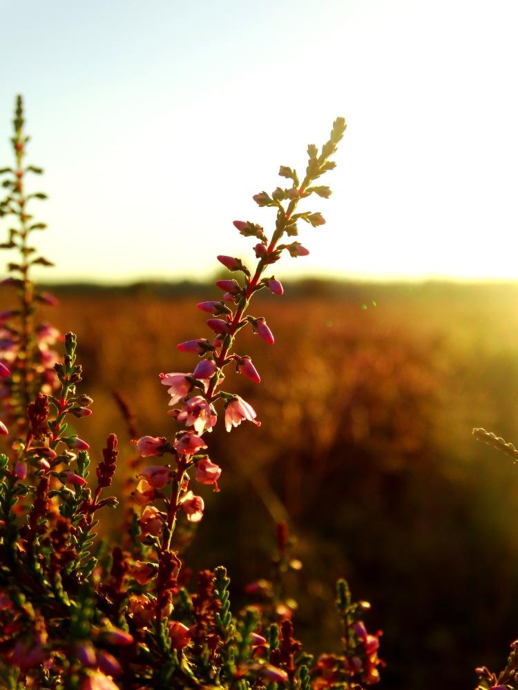 golden hour 4